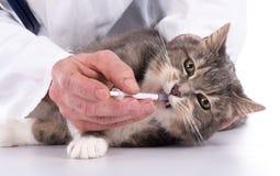 Katt på veterinärkliniken Royaltyfri Foto