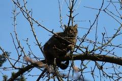 Katt på filial av trädet Arkivbilder
