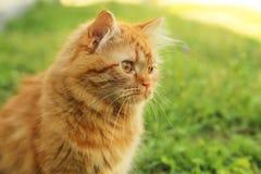 Katt på gräs Royaltyfria Bilder