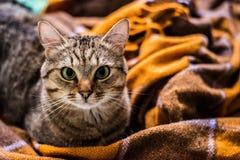 Katt p? s?ngen royaltyfria bilder