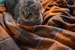 Katt p? s?ngen arkivfoton