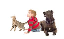 Katt, pojke och hund tillsammans Arkivfoton