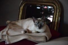 Katt/pratstund Royaltyfri Bild