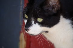 Katt- profil Royaltyfri Fotografi