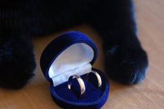Katt` s tafsar med en förlovningsring Arkivfoto