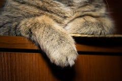 Katt` s tafsar närbild royaltyfri bild