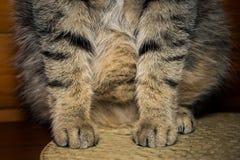 Katt` s tafsar närbild arkivbild