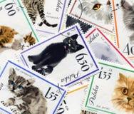 Katt- sammansättning Royaltyfri Bild