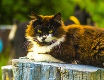 Katt se för kamerakatt Arkivfoton