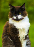 Katt se för kamerakatt den svarta katten eyes green Royaltyfri Foto