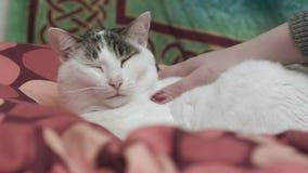 Katt som älskar affektion arkivfilmer