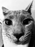 Katt som är nära upp av framsida Arkivfoto