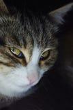 Katt som är nära upp i mörkret Royaltyfri Bild