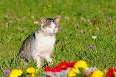 Katt som är utomhus- i parkera Royaltyfria Foton
