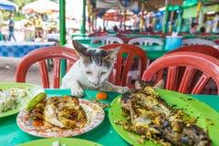Katt som äter fisken på tabellen Royaltyfri Bild