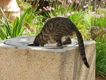 Katt som äter från en soptunna Fotografering för Bildbyråer