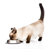 katt som äter mat På vitbakgrund Arkivbild
