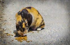 Katt som äter på gatan Royaltyfri Fotografi