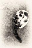 Katt som ansar sig på en vagga Royaltyfri Bild