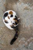 Katt som ansar sig på en vagga Fotografering för Bildbyråer