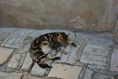 Katt som dåsar på en gata arkivbilder