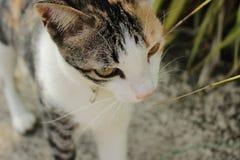 katt som döljer i högväxt gräs fotografering för bildbyråer