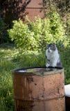 Katt som dricker från trumman arkivbilder