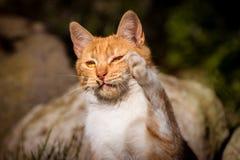Katt som fångar en fluga arkivfoton