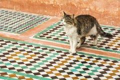 Katt som går över traditionella marockanska tegelplattor i Marrakesh royaltyfria bilder