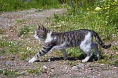 Katt som går i naturen Arkivfoton