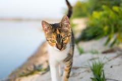 Katt som går in mot dig nära sjön Arkivfoton