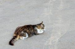 Katt som går på jordningen kopiera avst?nd arkivfoto