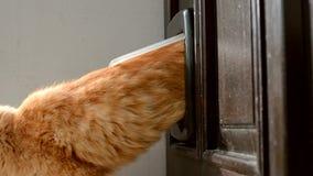 Katt som går ut till och med älsklings- dörr i en dörr stock video
