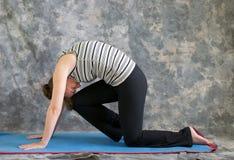 katt som gör yoga för kvinna för po-ställing stark Royaltyfri Bild