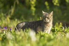 Katt som går på grönt gräs Natur Arkivbild