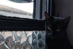 Katt som grubblar förutom fönstret Royaltyfri Fotografi