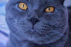 katt som h?ller ?gonen p? dig royaltyfria bilder