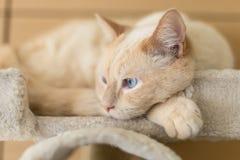Katt som hemma vilar arkivfoton