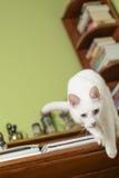 Katt som hoppar av från kanten av handstilskrivbordet Arkivbilder