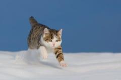 Katt som hoppar över snöfält Arkivfoto