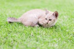 Katt som huka sig ned på gräsmattan Royaltyfria Foton