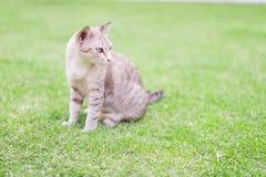 Katt som huka sig ned på gräsmattan Arkivfoton
