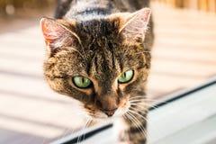 Katt som intresseras i något på golvet Katten såg något Royaltyfri Bild