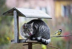 Katt som jagar en fågel Fotografering för Bildbyråer