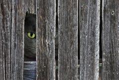 katt som kikar tom Arkivbild
