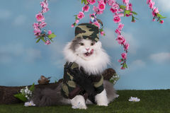 Katt som kläs som en militär vaktfred i träna royaltyfri bild