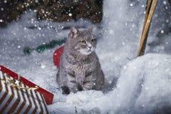 Katt som kläs som jultomten Fotografering för Bildbyråer