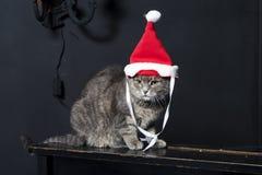 Katt som kläs som jultomten Arkivfoton