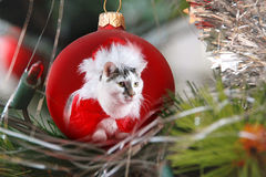 Katt som kläs som Santa Claus Arkivbild