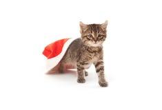 Katt som klibbas på jultomten hatt på vit Royaltyfria Bilder